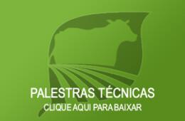 Bovinocultura à Pasto